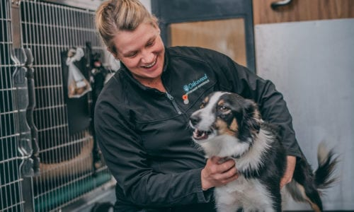 Veterinary nurse fussing dog