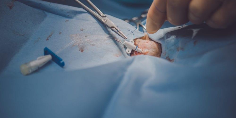 Soft tissue surgery at Oakwood Veterinary referrals